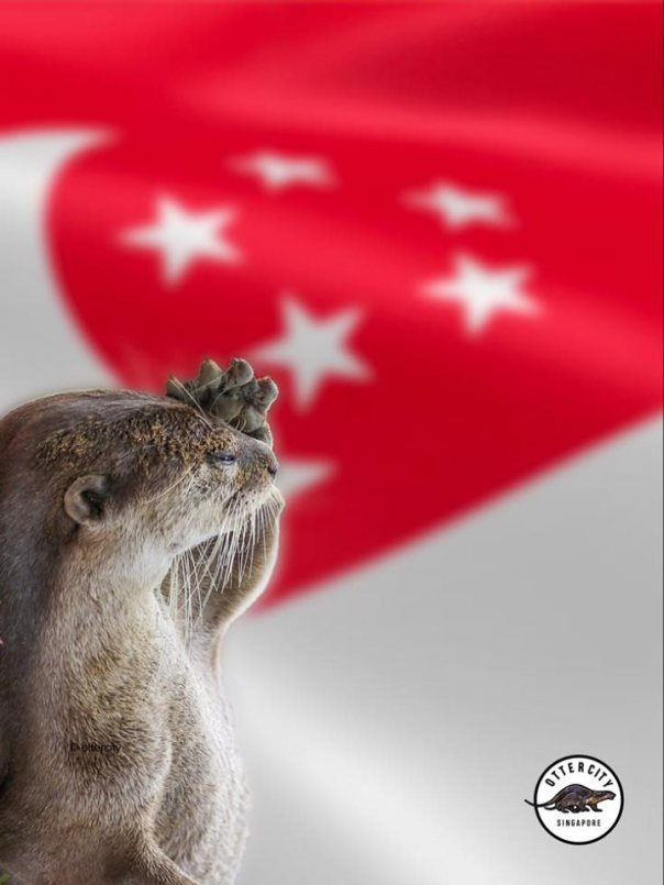 otter saluting flag